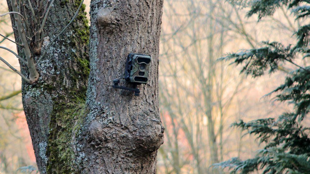 tree-3162111